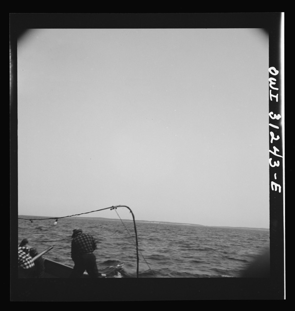 On board the fishing boat Alden out of Gloucester, Massachusetts. The seining boat cuts the water again after the skipper on the big boat sights another school of mackerel. One man is pumping water from the boat into the sea