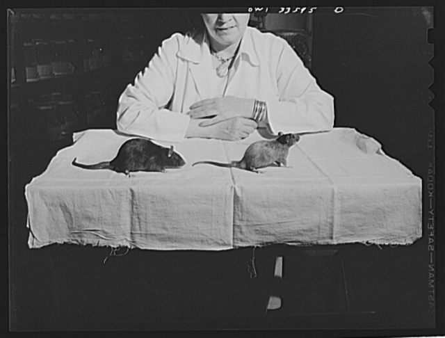 Parke, Davis and Company, manufacturing chemists, Detroit, Michigan. Response of rats to pantothenic acid