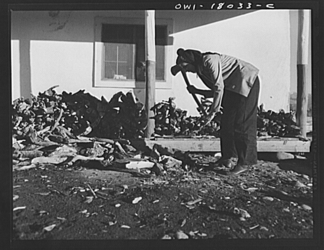 Penasco, New Mexico. Marjorie Muller, Red Cross resident nurse at the clinic operated by the Taos County cooperative health association, does her own cooking, cuts her own wood, and draws her own water