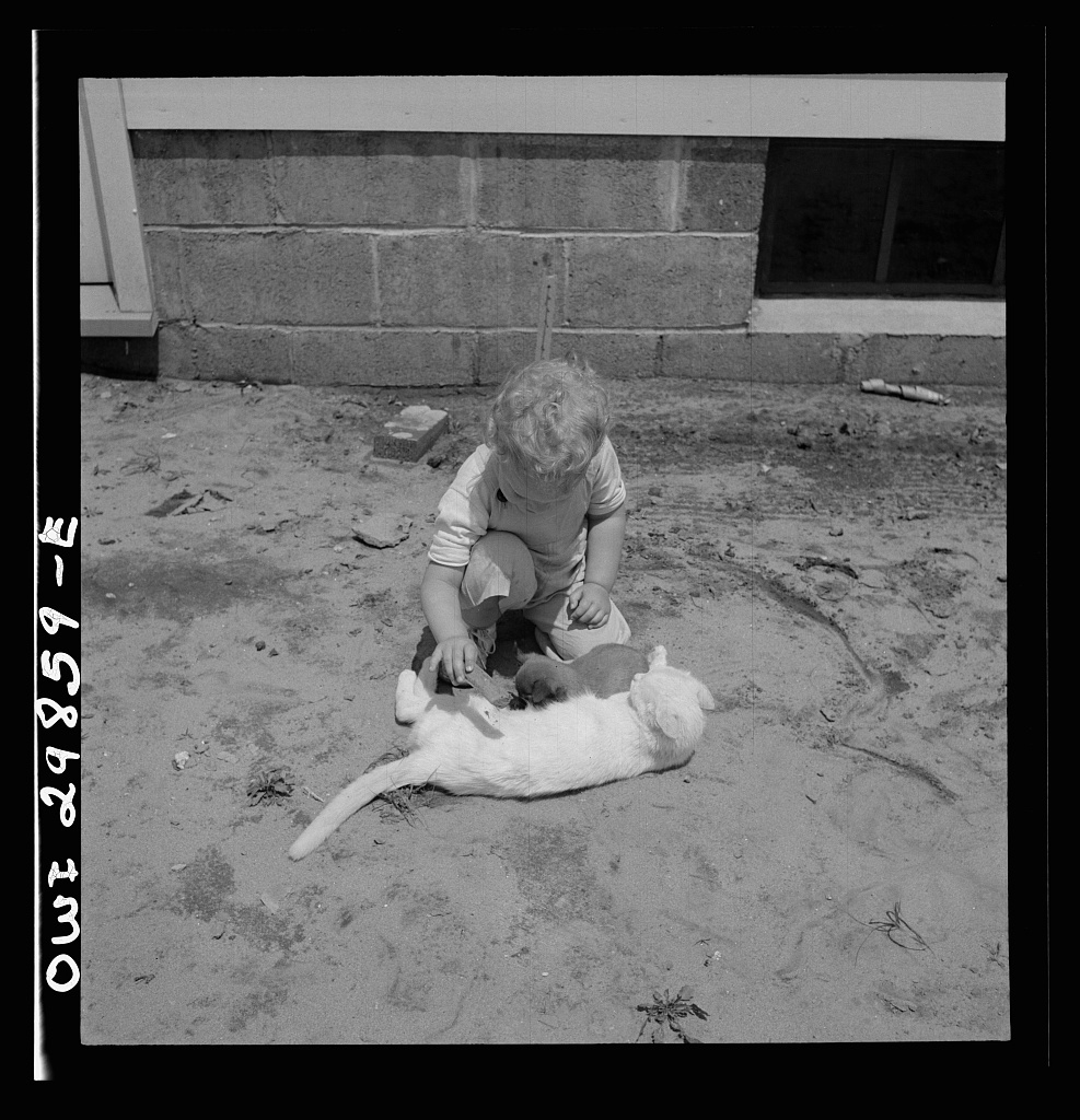 Point Pleasant, West Virginia. A child playing with a kitten