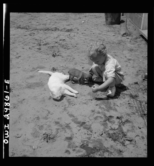 Point Pleasant, West Virginia. A child with a small puppy and a kitten