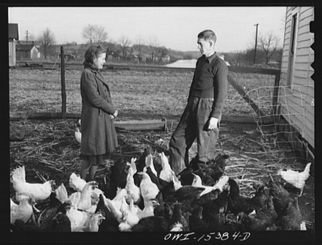 Rio Grande, Gallia County, Ohio. Reed and Evelyn Hall have their own chickens on dairy farm where Mr. Hall was employed as a result of the training program