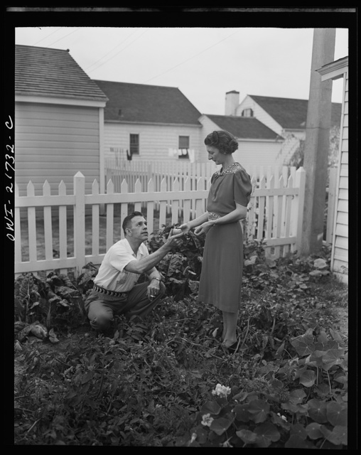Rochester, New York. Mr. and Mrs. Babcock enjoy their garden and grow most of their own vegetables