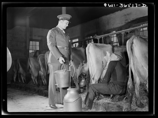 Rockville (vicinity), Maryland. Private Harvey Horton, visiting the N.C. Stiles dairy farm while on furlough from Fort Belvoir, Virginia, giving Robert Stiles a hand with his milking