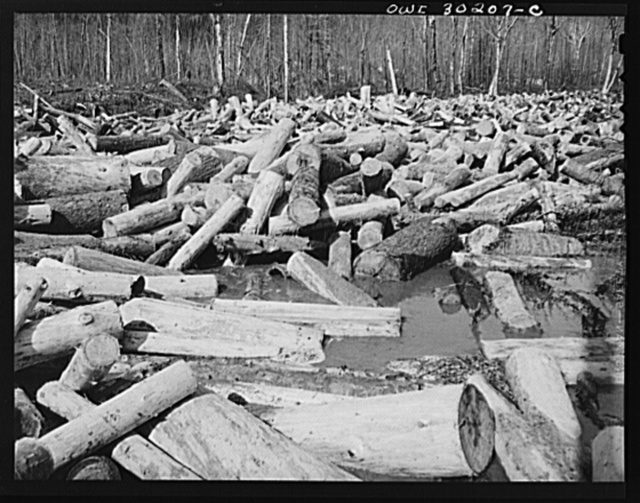 Spring pulpwood drive on the Brown Company timber holdings in Maine. Pulpwood caught in a jam on Dennison Bog Brook