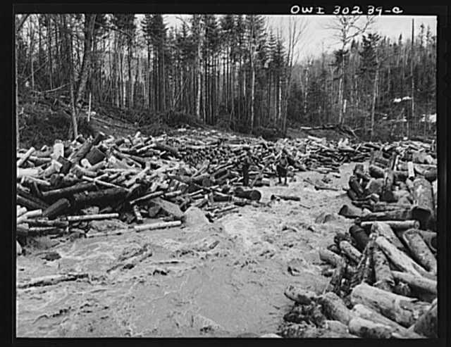 """Spring pulpwood drive on the Brown Company timber holdings in Maine. Woodsmen with pikes """"putting in rears."""" Piled logs on the bank behind them have been taken out of the center of the stream to prevent a jam"""