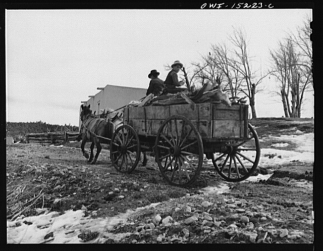Trampas, New Mexico. Juan Lopez, the majordomo (mayor), and his son arriving home with wood which they have gathered in the mountains