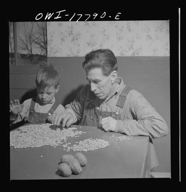 Trampas, New Mexico. Juan Lopez, the majordomo (mayor), sorting beans for the morning meal