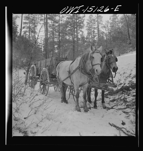 Trampas, New Mexico. Team belonging to Juan Lopez, the majordomo (mayor), waiting for him to load the wagon with firewood