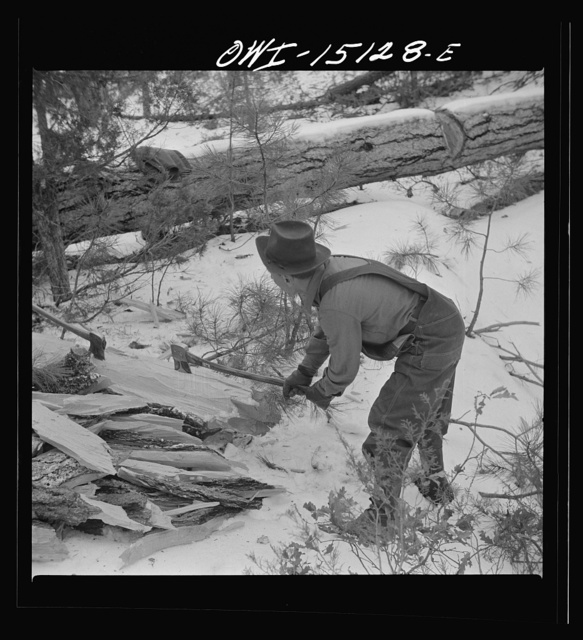 Trampas, New Mexico. The United States Forest service marked this dead tree. Juan Lopez, the majordomo (mayor), and his son cut it down, split it up, and carry it home for fuel
