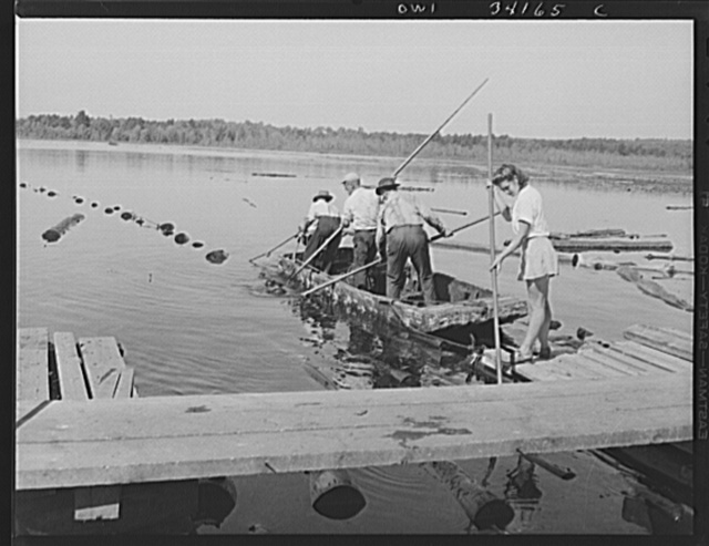 Turkey Pond, near Concord, New Hampshire. Women workers employed by a U.S. Department of Agriculture timber salvage sawmill. Florence Drouin, using a regular logging pike, pushing up onto the slip logs which the pond men have just towed in