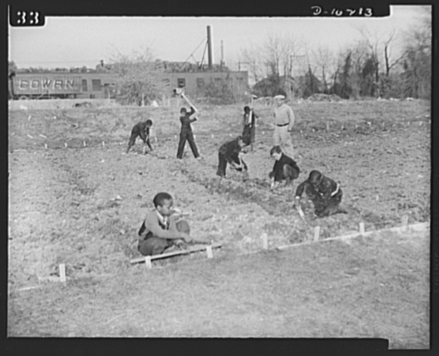Washington public schools go to war. The public schools of Washington, D.C., like those in most other sections of the country, have revised their curricula to fit the pupils for fuller participation in the war effort. They have gone all-out for the Program of Civilian Defense. Many of the schools have their Victory Gardens. Photo shows boys preparing the soil for their community Victory Garden under supervision of one of their teachers