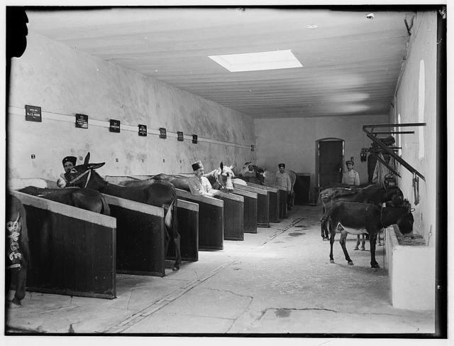 Animal hospital stables, Jerusalem, taken for Mr. Reynolds