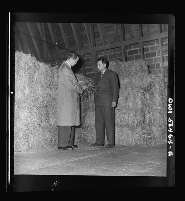 Chinese agricultural experts looking at timothy hay in University of Maryland agricultural school barn. A Chinese group is attending the UNRRA (United Nations Relief and Rehabilitation Administration) training center at the University of Maryland. From left: N.F. Chang and C.C. Chen