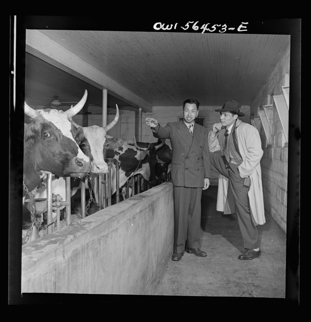 Chinese technical experts inspect model barn at University of Maryland barn, which is part of the UNRRA (United Nations Relief and Rehabilitation Administration) training center. From left: C.C. Chen and C.K. Lin