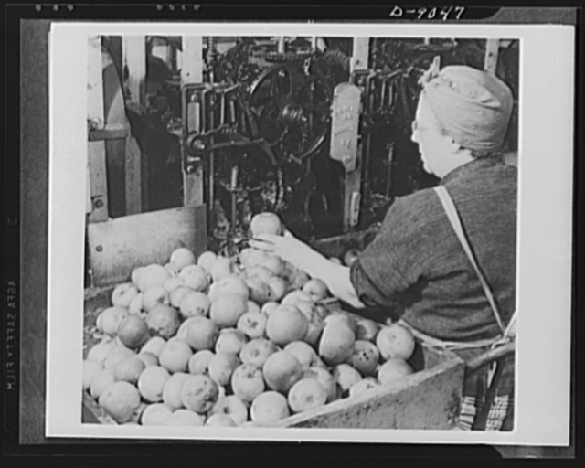 Drying and canning foods. Food processing, drying and canning is just as important a part of the U.S. Crop Corps work as food raising. This worker sits comfortably as she operates a machine which cores and slices apples in preparation for drying them for the nation's number two favorite dessert, apple pie. Only ice cream rates higher in America's affections