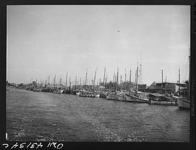 Tarpon Springs, Florida. Deep sea sponge fishing fleet in the harbor