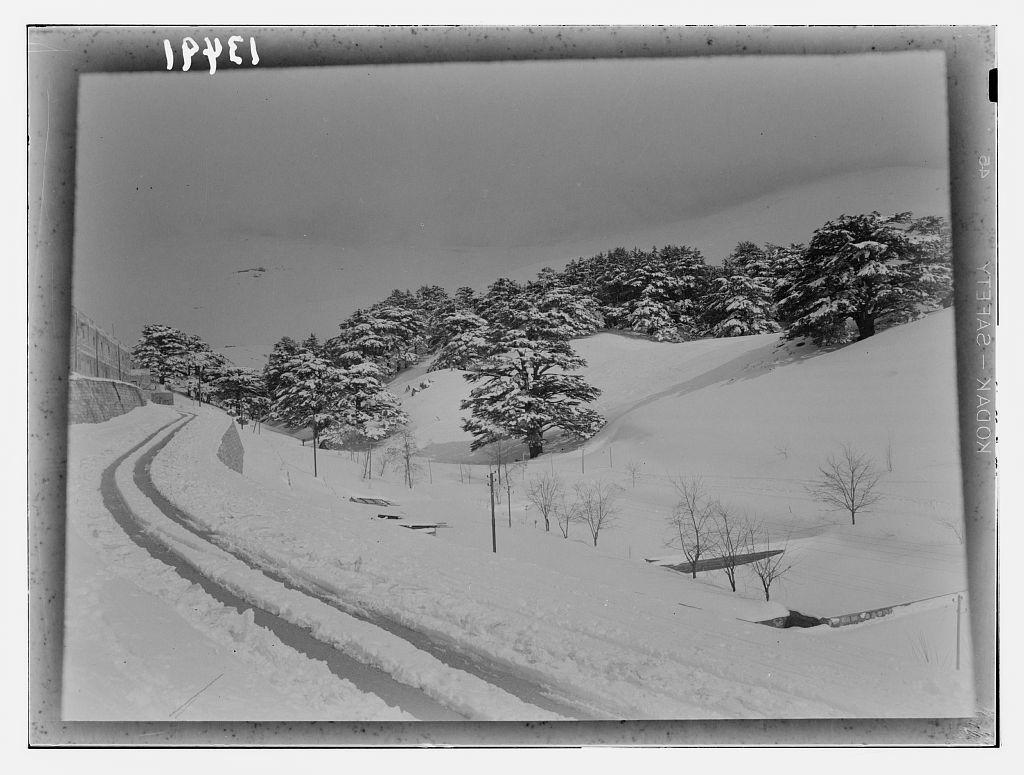 Cedars, cedar grove showing road approaching hotel