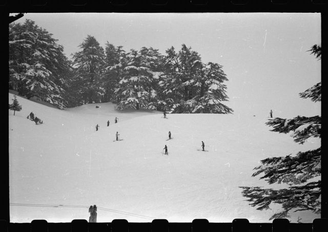 [Cedars of Lebanon in snow and skiers]