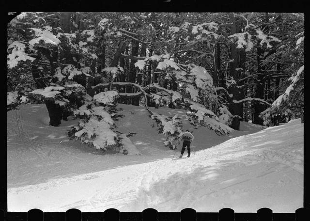 Cedars. Open mountain sweep below the Cedars