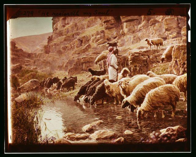 "Set of thirteen select slides of shepherd life illustrating the Twenty-Third Psalm. ""He restoreth my soul"""