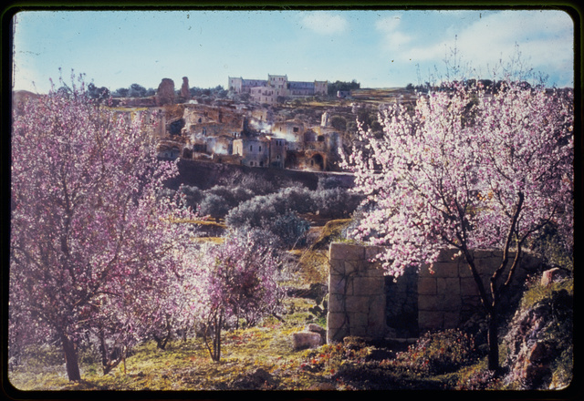 Mount of Olives, Bethphage and Bethany. Bethany in the garb of spring. Matt. 21:17