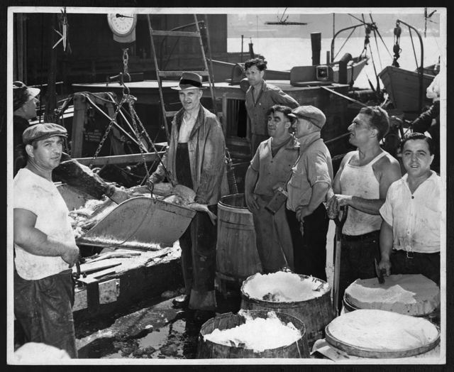 Weighing fish unloaded form dragger Nautilus at Fulton Fish Market, using scoop scales / World Telegram & Sun photo by F. Palumbo.
