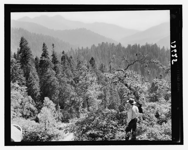 Sequoia National Park, Sept. 1957. Mountain scene, forest covering distant peaks