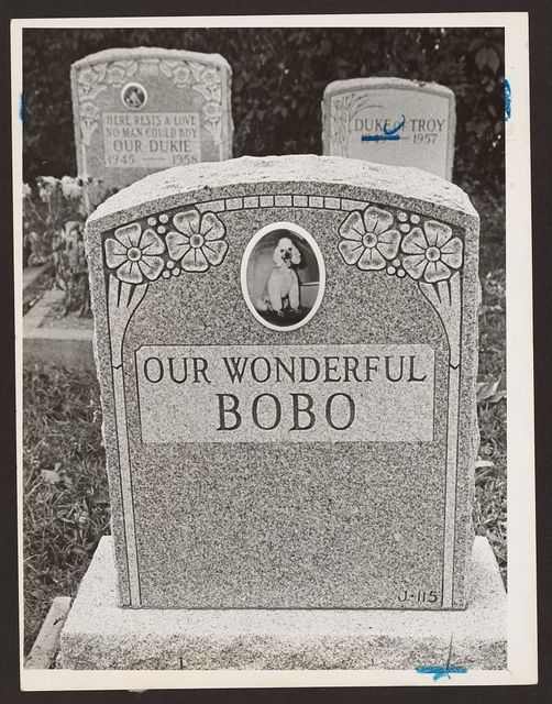 "[Tombstone with picture of a poodle bearing an inscription reading ""Our wonderful Bobo,"" two other tombstones behind this one] / World Telegram & Sun photo by Phil Stanziola."