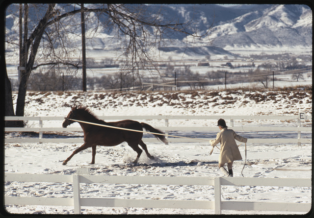 [Ann Bonfoey Taylor training a horse on a longe (lunge) line, mountains in background, Colorado]