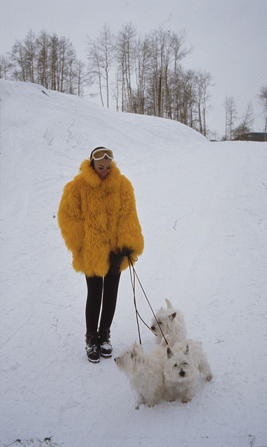 [Ann Bonfoey Taylor  wearing a yellow goatskin coat, walking her three West Highland White Terrier dogs, Vail, Colorado]