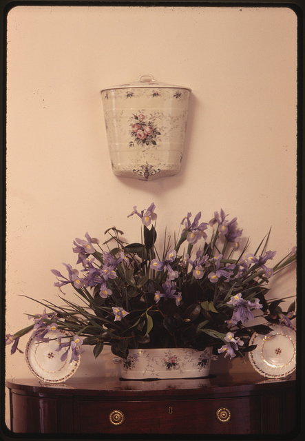 [Iris flower arrangement on table in the home of Ann Bonfoey Taylor, Colorado]