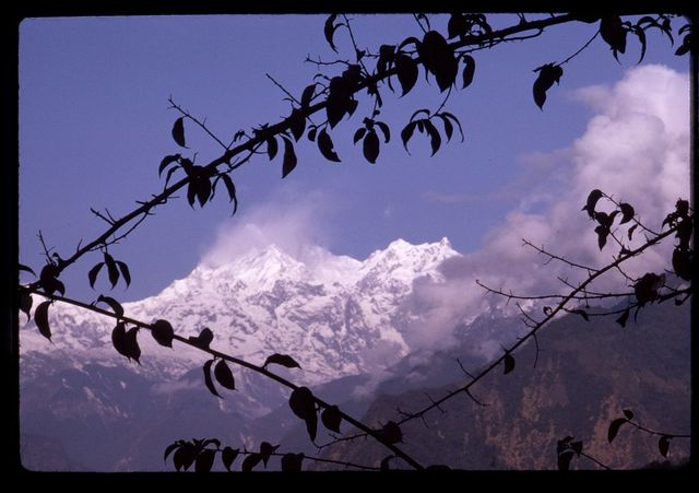 [Mount Kānchenjunga, third highest mountain in the world, seen through clouds and branches, Sikkim]