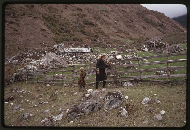 [Headman Pipon and child with hoes on shoulders, walk by fence in rocky field, Lachung, Sikkim]