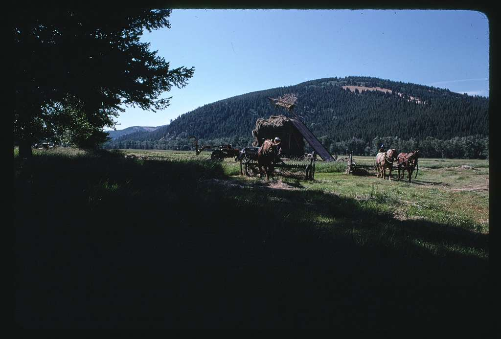 The Johnny Senecal Ranch outside Avon, Montana; Stacking hay with beaver slide stacker