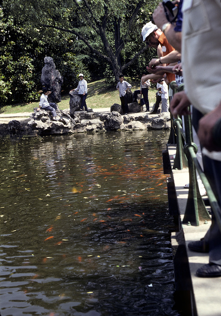[Tourists standing on a walkway over a stream and sitting on rocks along the shore, watching large schools of koi or goldfish, in China]