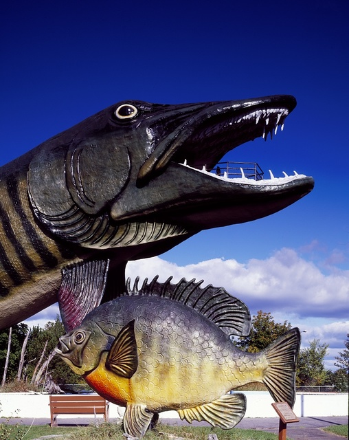 A 143-foot-long, walk-through, fiberglass-and-steel muskie, and a less-imposing fiberglass sunfish, at the National Fresh Water Fishing Hall of Fame, Hayward, Wisconsin