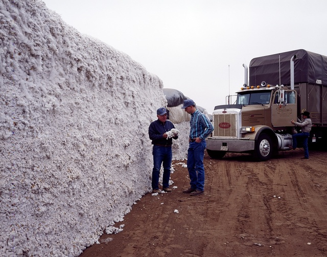 A huge allotment of cotton gets a quick inspection at Buster's cotton gin near Lubbock in the Texas panhandle