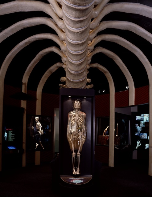 Amazing Body Pavilion at the Museum of Health and Medical Science presents an inside view of the human body, Houston, Texas