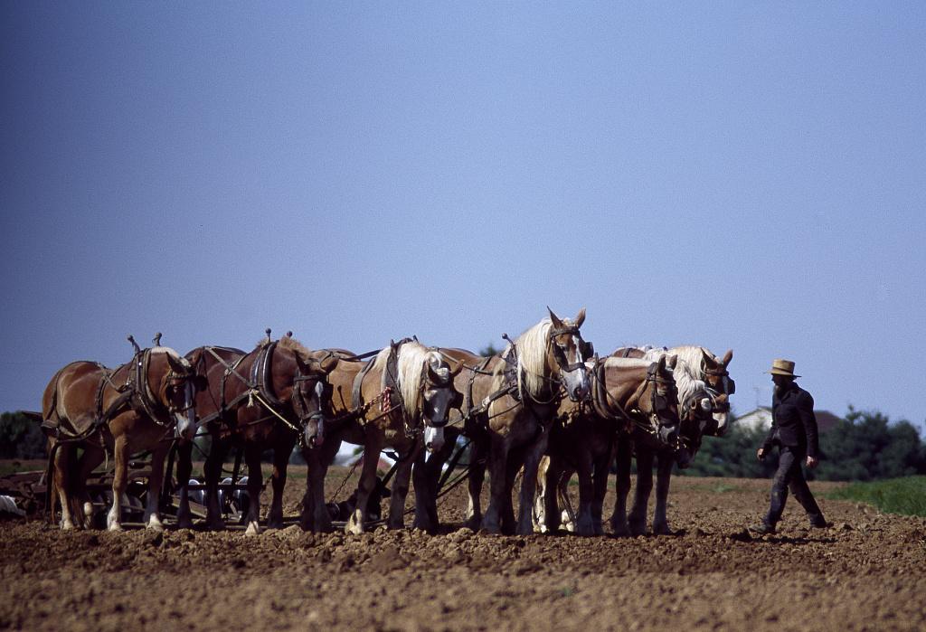 Amish farmer and his team of draft horses, Lancaster, Pennsylvania
