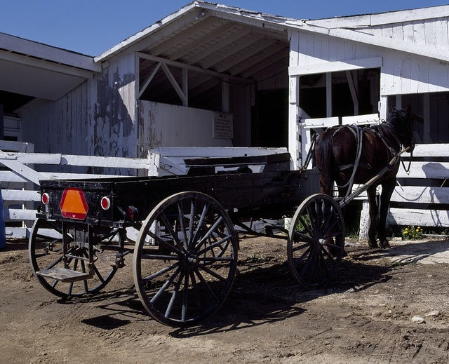 """Horse and flatbed buggy in """"Amish Country,"""" Lancaster County, Pennsylvania"""