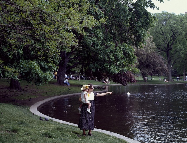 Idyllic lagoon in the Public Garden, created in 1837, Boston, Massachusetts