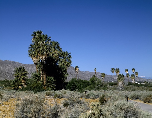 Palm and other trees in Twenty-Nine Palms, California, which has many more than that number of palm trees
