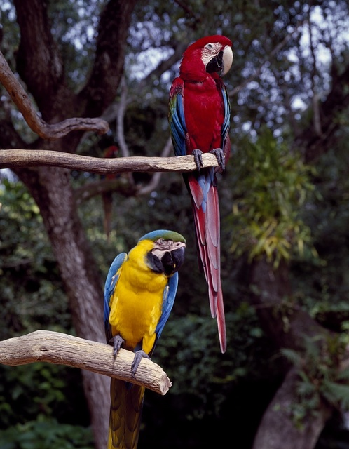 Residents of Parrot Jungle and Gardens, south of Miami, Florida