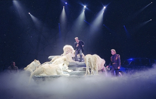 Superstar Illusionists Siegfried (right) and Roy (and a large feline friend) perform at the Mirage Hotel prior to Roy's nearly fatal encounter with a white tiger on stage during one of their performances in Las Vegas, Nevada