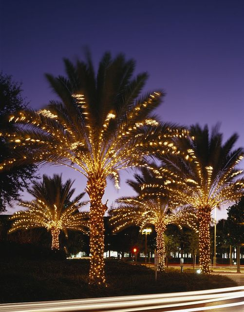 Twinkly lights on the palm trees at the Peabody Hotel, Orlando, Florida