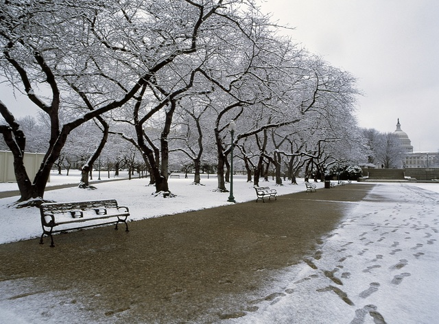 Wintertime view of pedestrian path on the National Mall, with the U.S. Capitol in the distance, Washington, D.C.