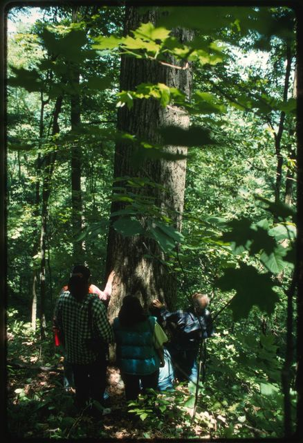 """Appalachia Forest Action Project volunteers looking at """"Big Red,"""" an old-growth red oak tree on Joe Aliff's property"""