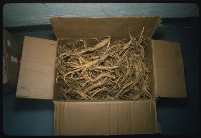 A box of cultivated ginseng from out-of-state at Randy's Recycling in Peytona, West Virginia