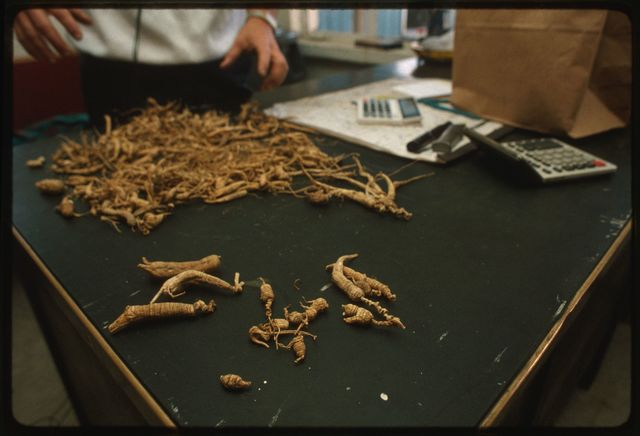 Examples of ginseng roots laid out on a table in the purchase room at Randy's Recycling